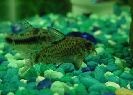 acuario2.jpg