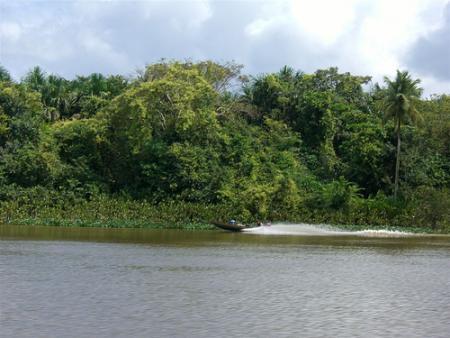 amazonas-venezuela.jpg