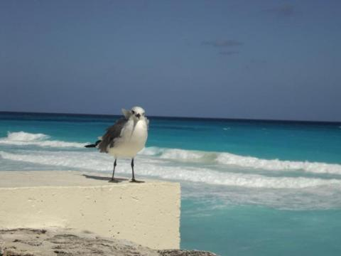 playa-isla-margarita.jpg